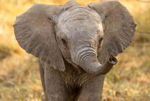 roztomilé zvířátka