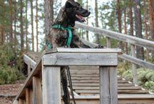 Hiking with Dogs / Experience Rokua Geopark area with your furry friend. Rokua Health & Spa Hotel is dog friendly hotel near Rokua National Park.
