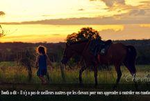Mes chevaux - Citations & idées