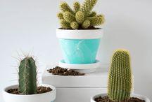Cacti/Succulent Care
