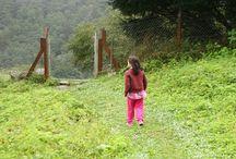 Yöresel Lezzetler / Gözünüzün alabildiğince yeşil yaylalar, sık ağaçlı ormanlar, başı dumanlı dağlar, tertemiz hava…