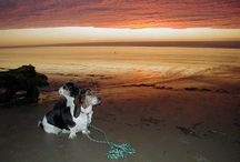 Happy Dogs at Heceta Beach / Dog guests at Whales Watch Vacation Rentals
