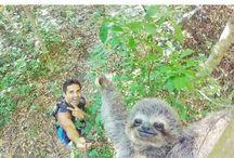 Selfies and Photobombs