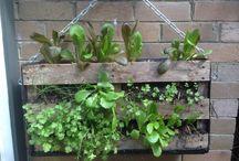 recycler les palettes au jardin