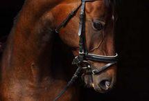 koníky <3