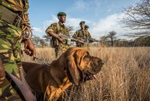 Poaching in Kenya