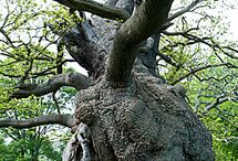 drzewa dziwy / dziwne drzewa