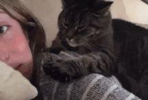 Katzen und andere Typen