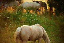 HORSES........