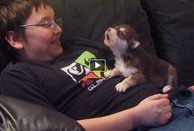 videos  de animais e mensagens