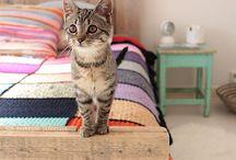 My patronus / Cats cats cats cats cats I love cats