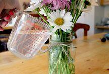 Home - Flowers & Plants / Wild beautiful flowers