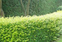 Tuin / Ideeën voor in de tuin