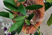 orquídeas y otras