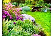Gardening / Flores, arranjos, vasos e ideias para jardins. / by Evian Santos
