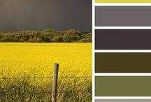 Kleurenschema