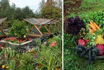 Garden + Outdoors / by Kristen Dechert