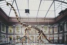 Esqueletos dinosaurio / ¿Cómo es el esqueleto de un dinosaurio?