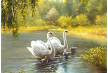 Swans / White swans