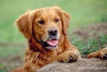 luv my pup! / by Aimee Wayne
