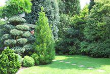 Naše krásná zahrada. / Pěstování okrasných stromů a keřů.