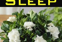 plants improve restful sleep