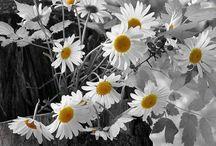 MUSINGS | FLOWERS