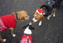 Beagle túra, találkozók