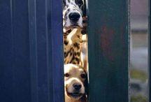 I nostri amori ! / Immagini e altro di cani e gatti