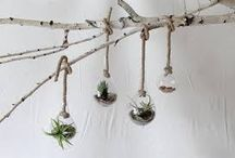 Hanging Glass Terrarium / Container