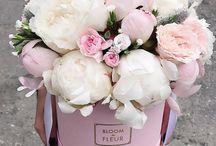 kukkasia/kasveja
