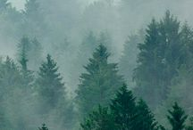 Foggy forest / Picturewall.com