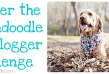 Spencer the Goldendoodle's Blog