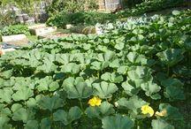 Yummy garden veg
