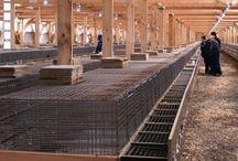 Fur Farming & Agriculture
