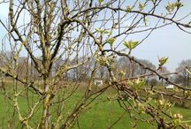 Voorjaar  / Een nog lege Rietkraag