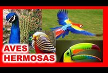 aves +hermosas