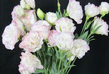 in season flowers / by Jordan Hill