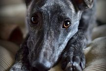 lurcher / by Jacquin Watkins