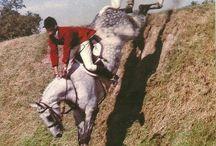Vintage-horse