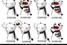 Panda loves