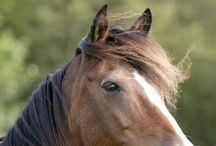 Horse Psychology / Always learning about the psychology of a horse - especially those who have been abused, neglected or have been exposed to a feed lot or slaughter auction.