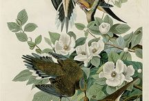 19th Century Birds with Plant Illustrations / by Swallowtail Garden Seeds