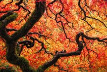 O magnificent tree / The majesty and magic of trees / by Miranda Hersey