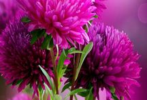 květiny:zahrady