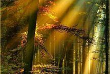 La Schwarzwald / Vi è un luogo dove sogno e realtà si fondono in un maestoso incanto, è la Schwarzwald, la Foresta Nera, una delle zone più suggestive della Germania.