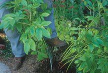 Come coltivare piante aromatiche