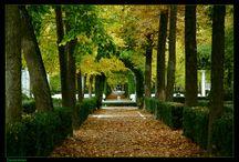 Jardines. / Sobre jardines,plantas y su decoración.