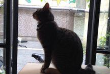 고지태 고양이 Go Jitae the CAT / 남포동 까페 꼴롬브 고양이 고지태의 일상