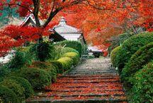 Beautiful Nature / Nature, Places, Animals